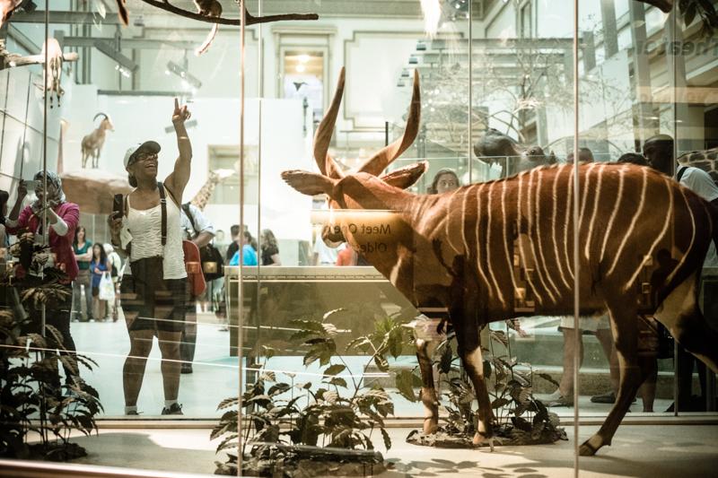 charlenewinfred-museum-wildlife-4