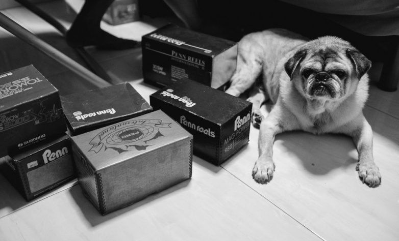 Georgy oversees the packing up of his master's prized possessions