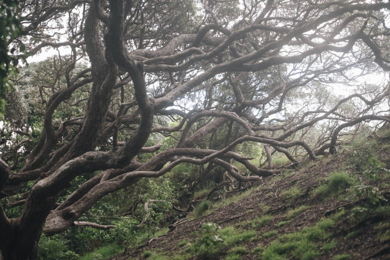 A magical forested portion of the path to the beach from the carpark