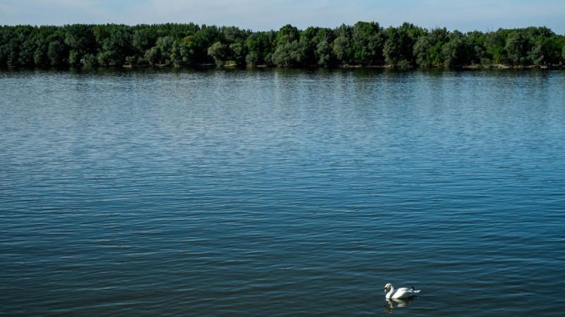 White swan, blue Danube