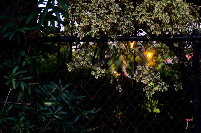 CharleneWinfred-Nightwalking-3684