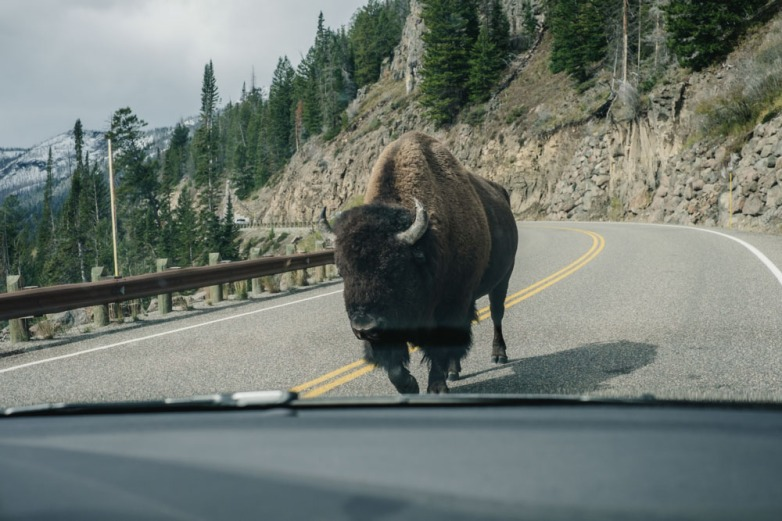 CharleneWinfred-Yellowstone (2 of 6)