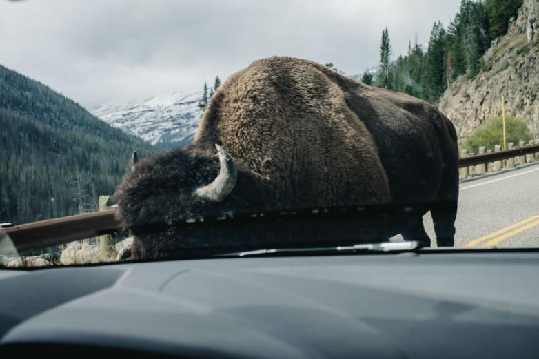 CharleneWinfred-Yellowstone (4 of 6)