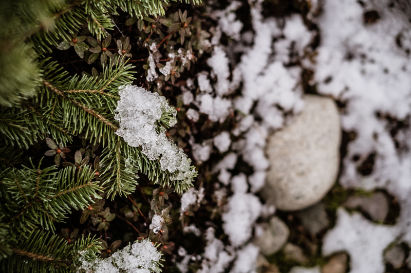 cw-snow-seattle-2