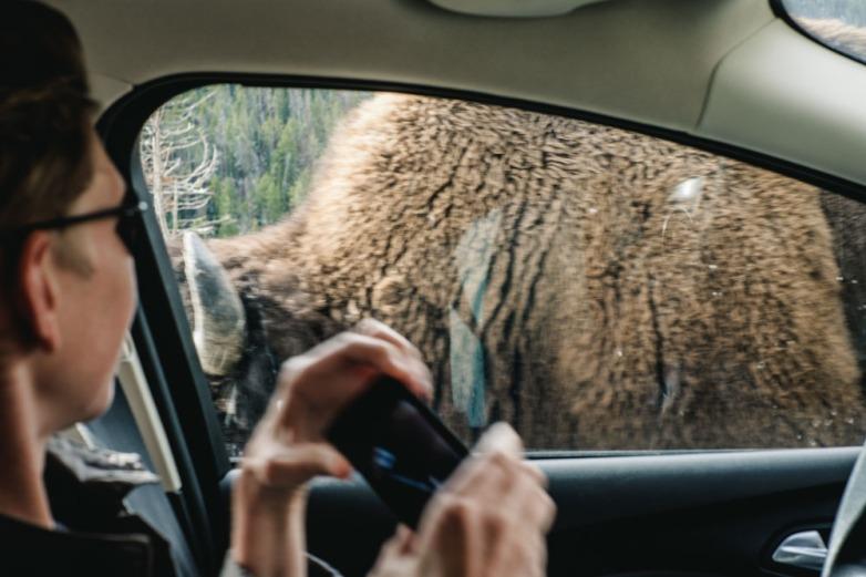 CharleneWinfred-Yellowstone (5 of 6)