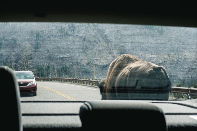 CharleneWinfred-Yellowstone (6 of 6)