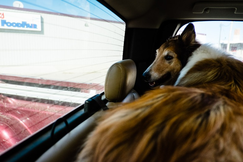 Ben waits for his best mate, Lyle, to come back into the truck