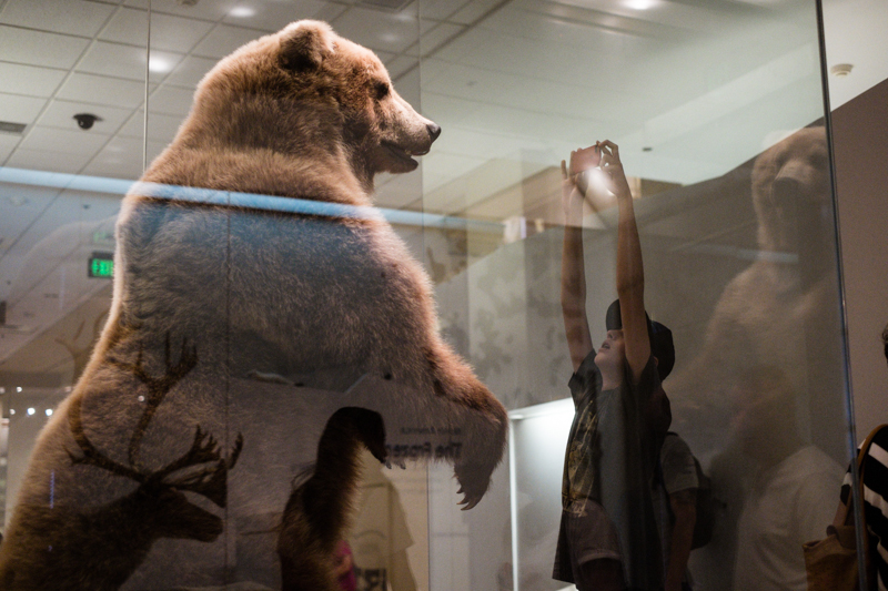charlenewinfred-museum-wildlife-3