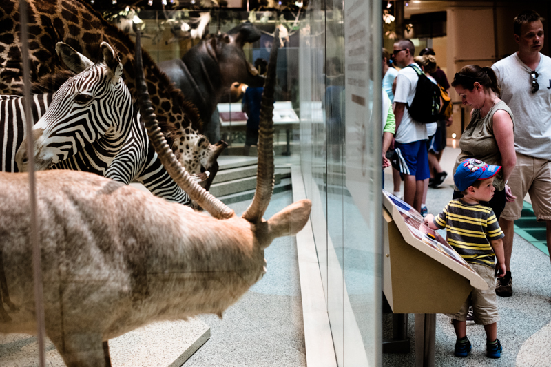 charlenewinfred-museum-wildlife-2